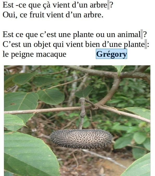 peigne-macaque-gregory