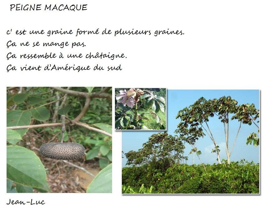 peigne-macaque-jean-luc
