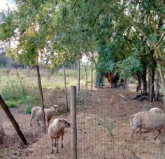 Visite à la ferme de la Riberderie