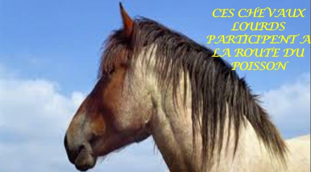 2021-07-22-hardis-mareyeurs03