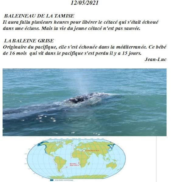 20210521-jeanluc-baleineau