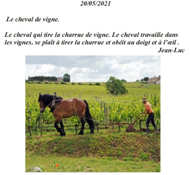 20210521-jeanluc-chevaux
