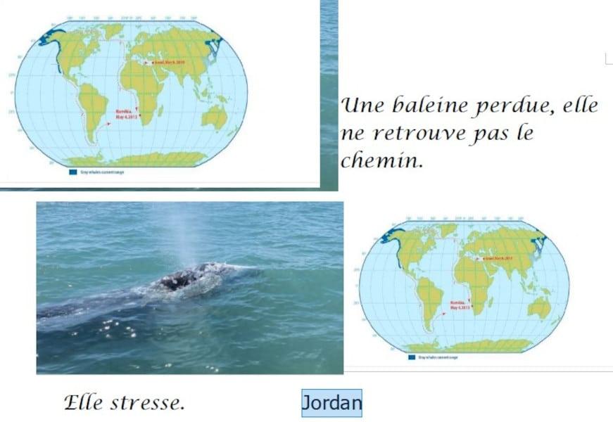 20210521-jordan-baleineau
