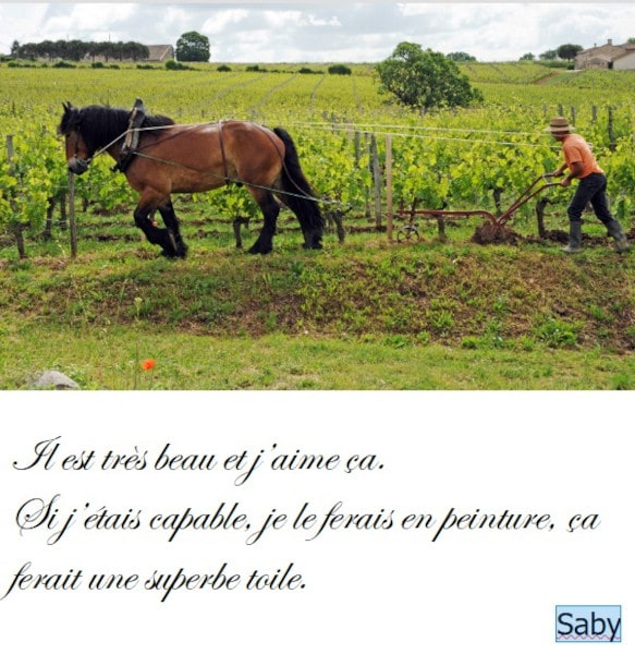 20210521-saby-chevaux