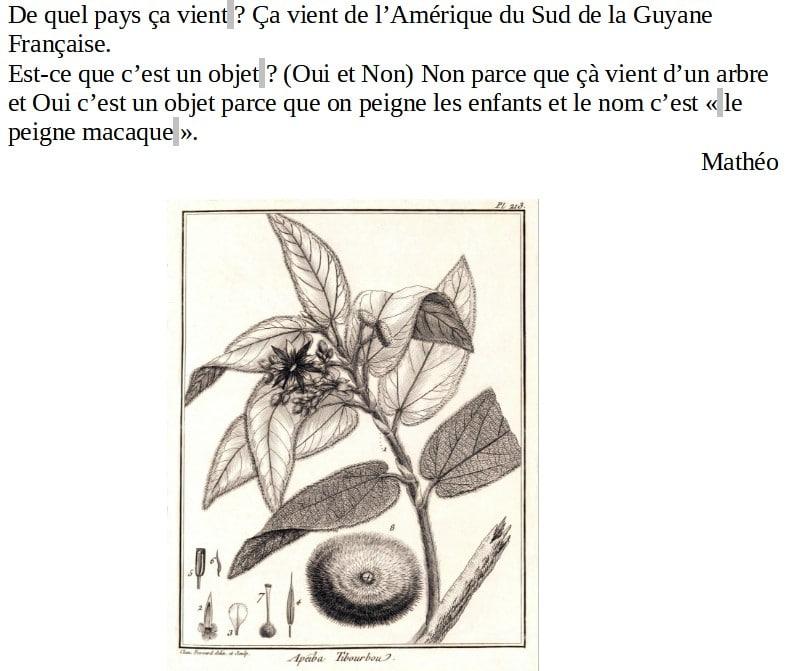 peigne-macaque-matheo