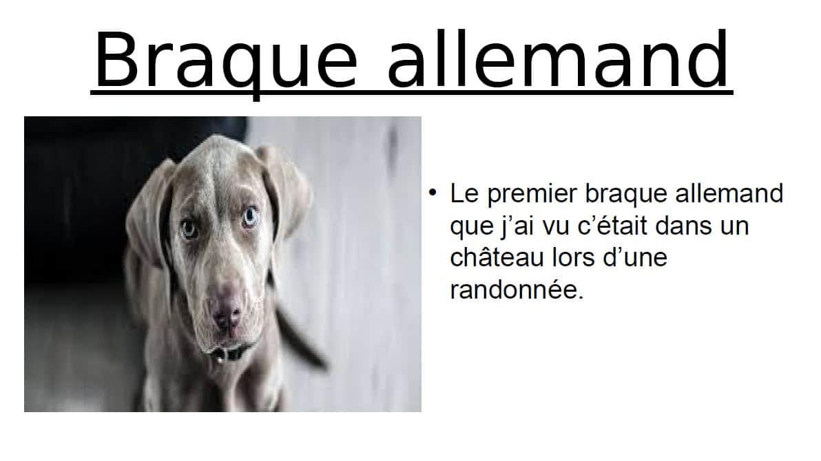 Yannick: les races de chiens
